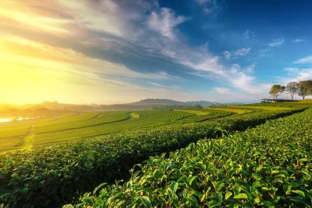 """Uno de los platos más conocidos y adorados por los locales es una ensalada de hojas de té fermentadas llamada """"lahpet thoke"""" ."""