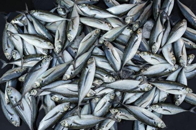 i5dtgujqvylupaczwhsi - 5 מאכלים עתירי כולסטרול - שדווקא בריאים לנו