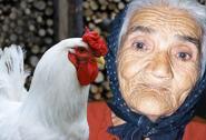 La vecchia e la gallina, vota le barzellette piùbelle e invia la tua: partecipa alla sfida!