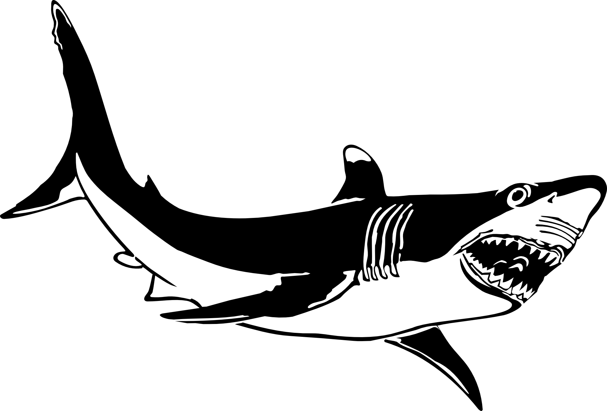 hight resolution of great white shark clipart black and white clipart library free