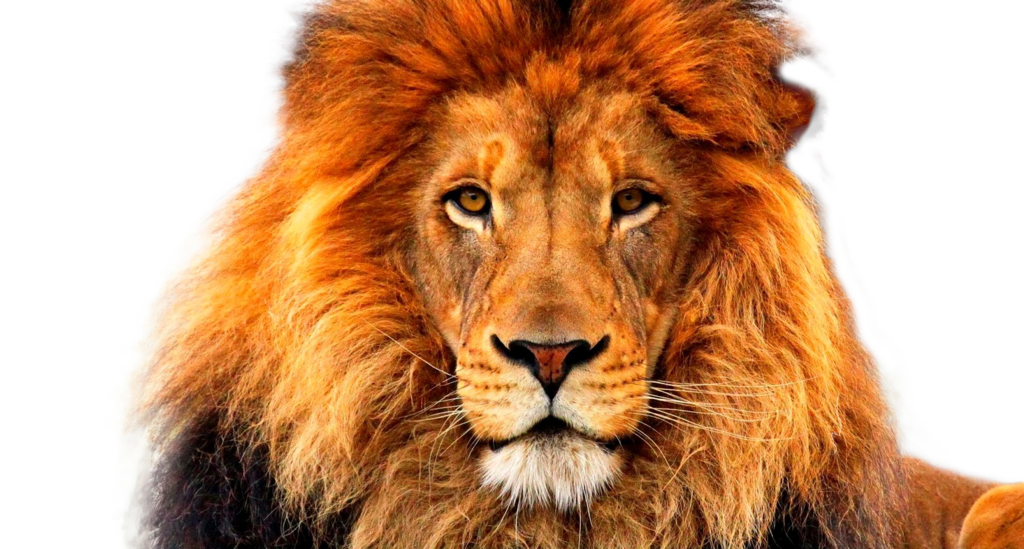 lions face png free