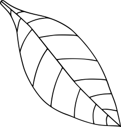 Black And White Transparent Background Leaf Clipart