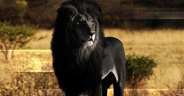 12 rare animals you