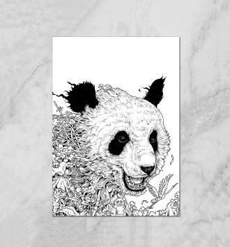 Король Панда