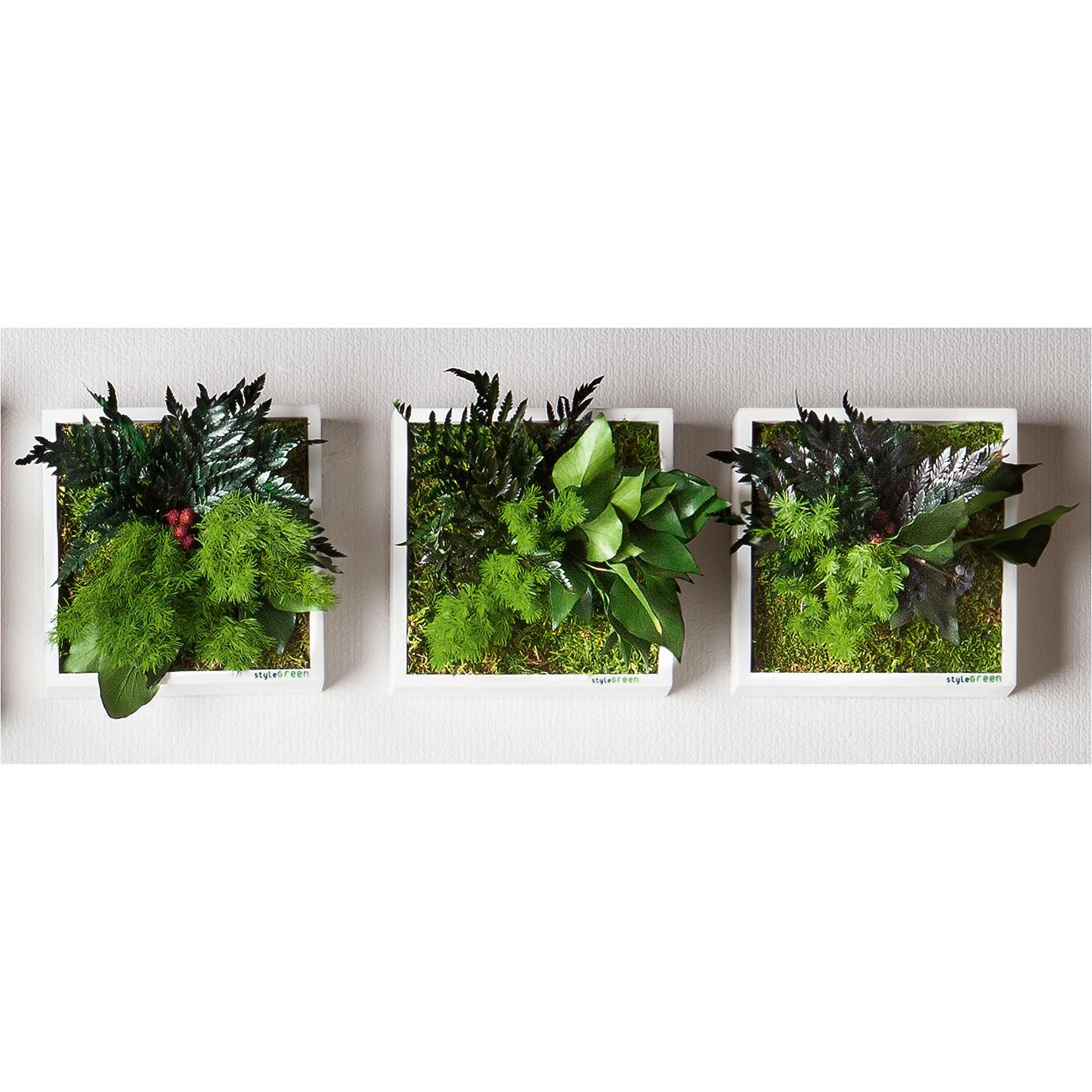 Echtpflanzenbilder  3 Jahre Garantie  ProIdee