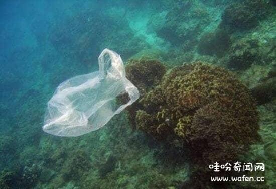 海水中的微生物有哪些 ,海洋中常見的微生物有盤點(菌類/藻類)_哇吩奇聞網