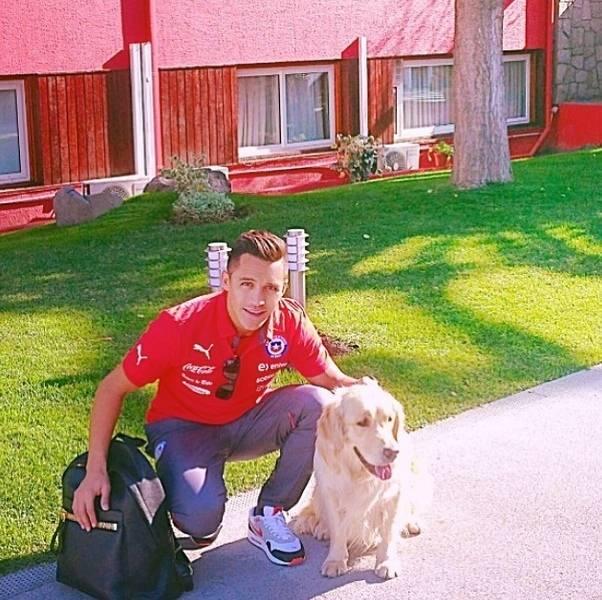 Outro jogador apaixonado por animais e com dois companheiros caninos é o atacante Alexis Sánchez
