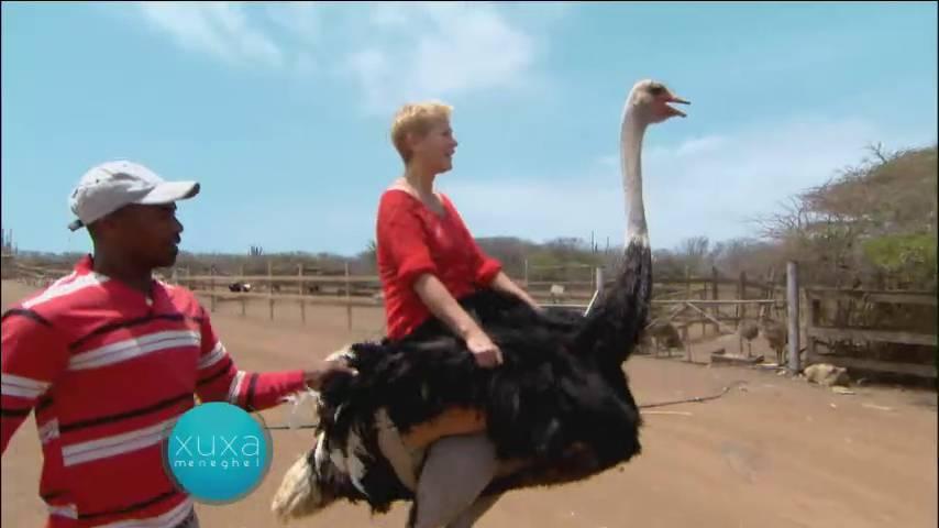 No local, Xuxa fez vários passeios e até andou numa avestruz!> Acesse o R7 Play e assista na íntegra a todos os programas da Record! Clique e experimente!