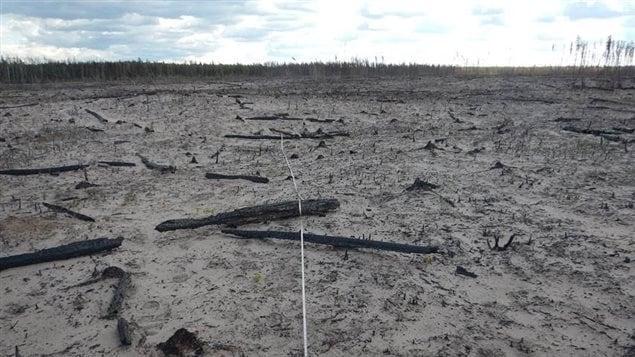 Un terrain où il ne reste plus que quelques troncs d'arbres calcinés.