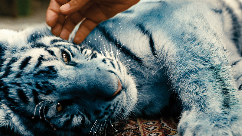 German Girl Wallpaper Modr 253 Tygr The Blue Tiger Wins Best Picture At