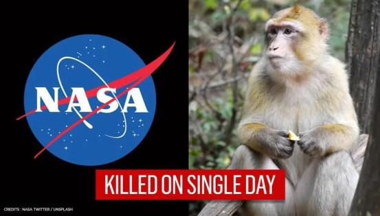 27 monkeys kept at NASA facility killed in mass euthanasia enraging activists: Report