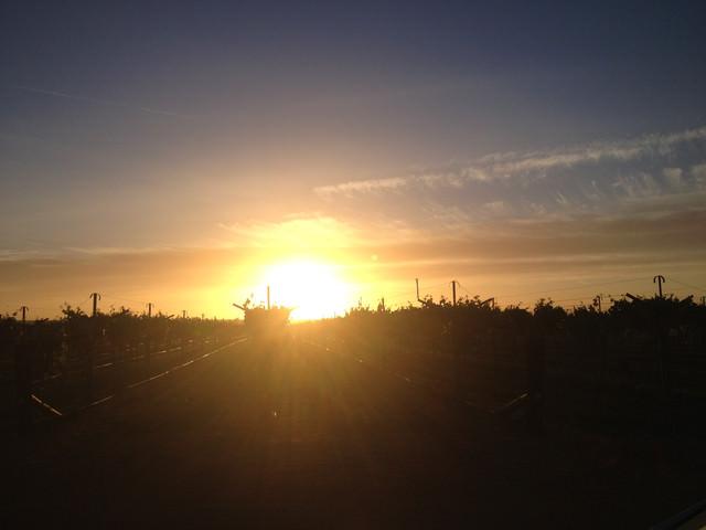 【10/10-10/31】那些農場的黑工頭-Robinvale初體驗