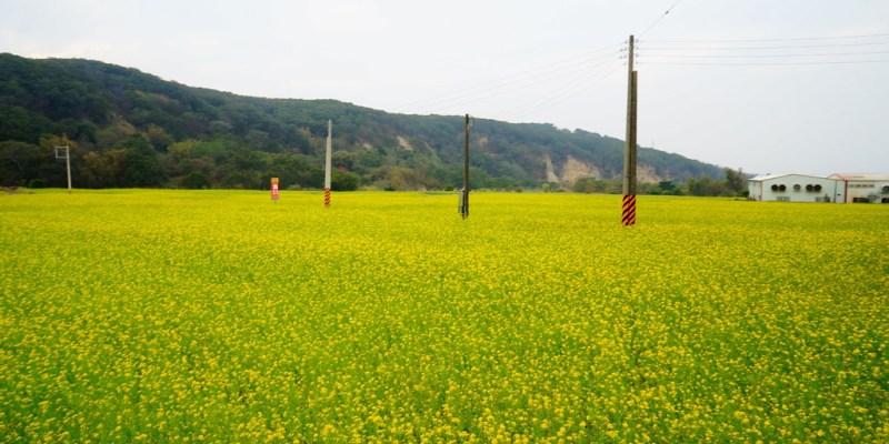 【遊記*苗栗】 2015 油菜花爆炸盛開!! 漫步花海覆蓋的金黃山城