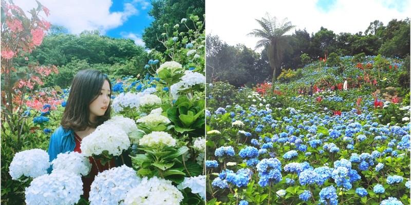 沖繩景點 | 超美超值得去的隱藏景點!Yohena 饒平名繡球花公園  開花時間、門票費用、導航資訊