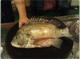 (魚)常被認錯的黑格
