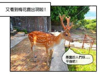 |旅遊漫畫|台灣的這座島上竟然有上百隻的梅花鹿!-馬祖大坵