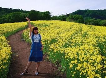 春季限定油菜花海!怎麼拍都好看人人都是網美/ 福島 三之倉高原