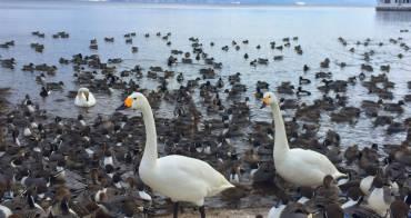 福島親子行 福島景點 搭乘天鵝船去遊豬苗代湖 夏天也一樣風景美喔
