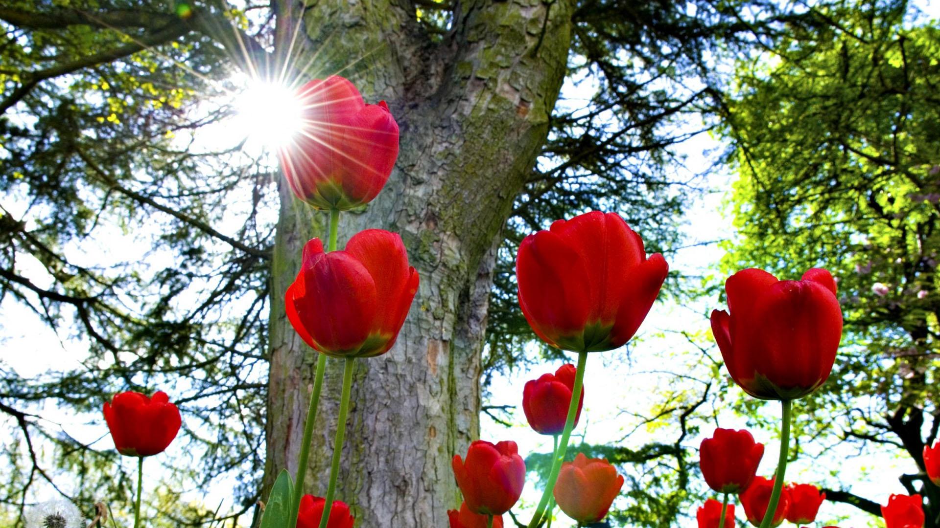 Spring Anime Wallpaper عندما تأسرك الطبيعة بجمالها الخلاب اروع واجمل الصور من