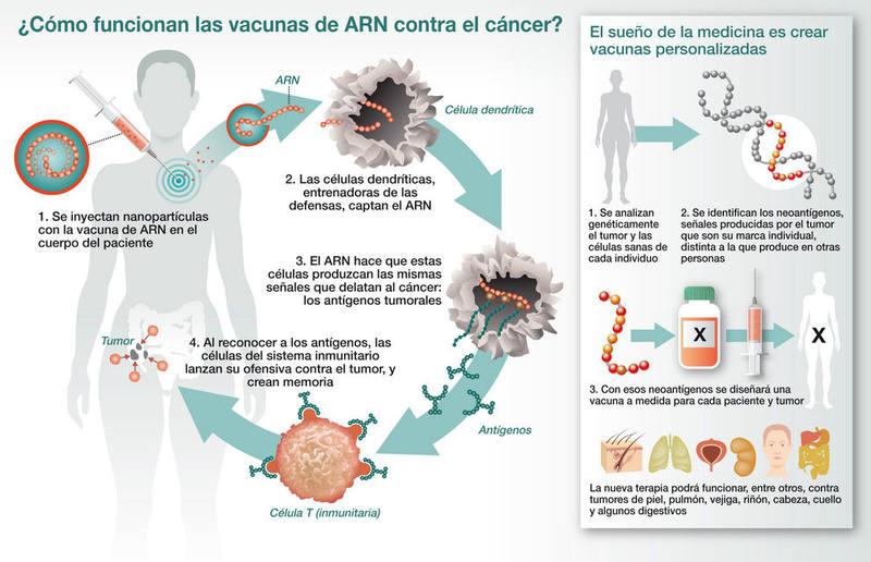 De las nuevas vacunas experimentales que atacan el cáncer, la más prometedora es la de ARN. Infografía: J. A. Peñas | SINC