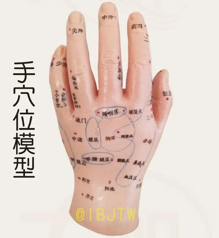 經絡 手部 針灸 模型【福滿來】手穴道模型 手部 反射區模型 手模 穴位模型 按摩手模型 ARJT - 露天拍賣