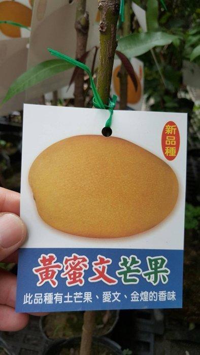 ╭*田尾玫瑰園*╯新品種水果苗-(黃蜜文芒果)高70cm200元 | 露天拍賣