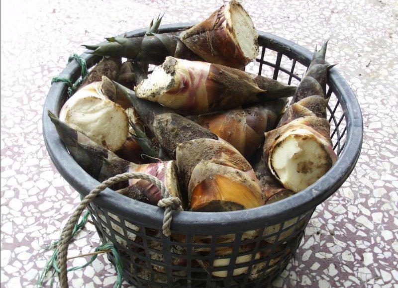 宜蘭黑毛綠竹筍-烏殼綠筍-售完勿下標 - 露天拍賣