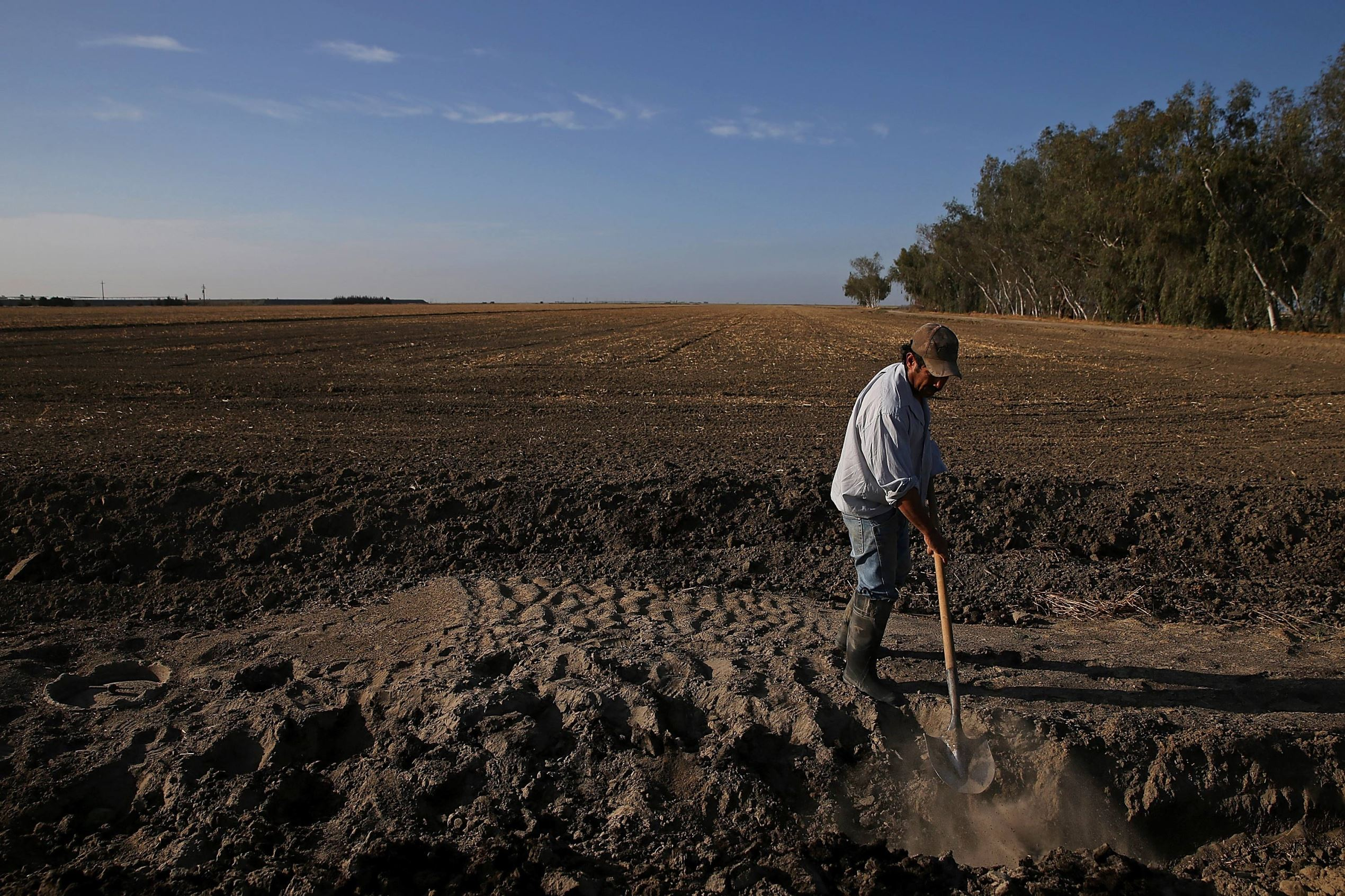 A worker digs a ditch next to a fallow field on April 24, 2015 in Hanford, California. As California enters its fourth year of severe drought, farmers in the Central Valley are struggling to keep crops watered as wells run dry and government water allocations have been reduced or terminated. Many have opted to leave acres of their fields fallow.