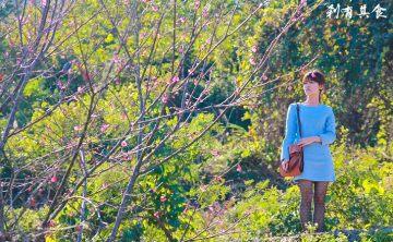 [台中賞櫻] 櫻花林週邊小秘境 @2014新社賞櫻美食地圖(3) 俯拾即是的山櫻花大軍