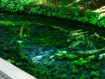 shirakawa_spring_water_spot1