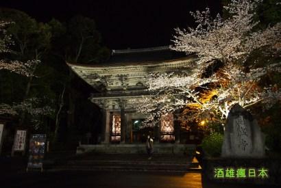 [滋賀賞櫻]三井寺夜櫻、琵琶湖疏水-大津賞夜櫻第一首選