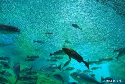 九十九島水族館「海きらら」-大水槽跟挖珍珠體驗,可以玩半天喔!