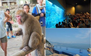 快速規劃大分市動物的一天行程-海之卵水族館&高崎山自然動物園