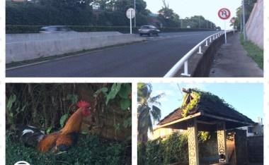 [南半球冒險之旅]大溪地之三大不可思議:公車、高速公路與尖叫雞