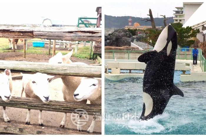 千葉親子自駕兩大景點-母親牧場與鴨川海洋世界 跟動物度過快樂時光