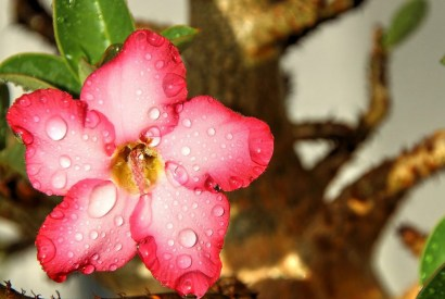 札幌商工會議所的及時雨措施 幫助北海道商家走出病毒陰霾 #酒雄隨筆