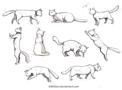 'drawing a cat' in Drawing References and Resources