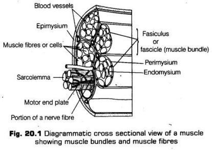 CLASSNOTES: Biology Notes For Class 9 Icse Pdf