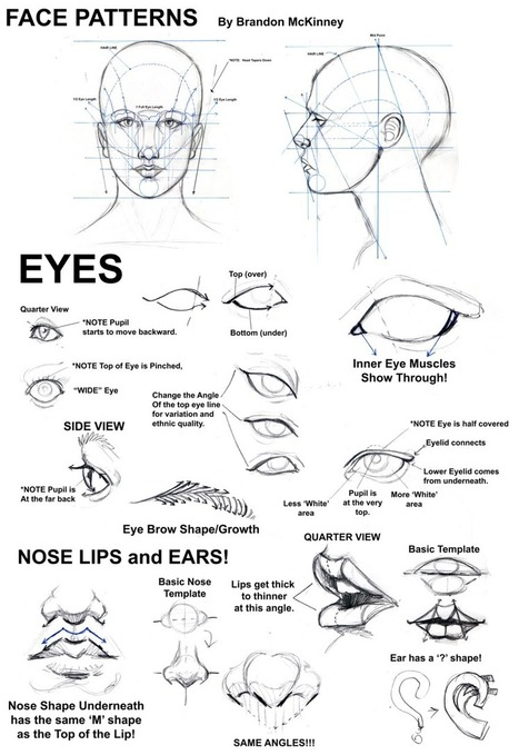 'face drawing reference' in Drawing References and Resources