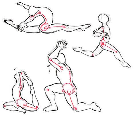 Human Anatomy Fundamentals: Flexibility and Joi...