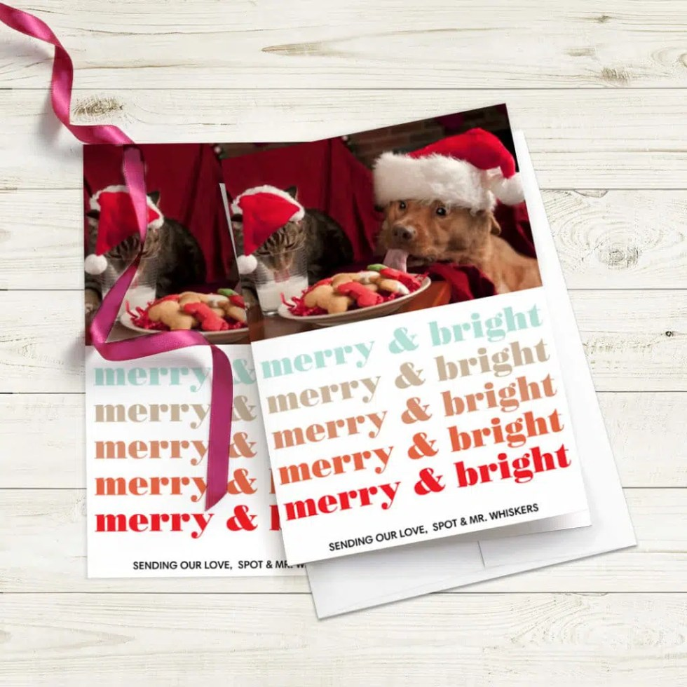 greeting cards featuring cat and dog in santa hats, one ribbon strewn across cards