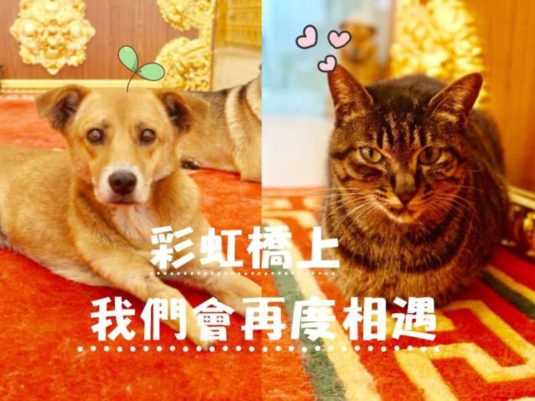 萬里福田寵物城堡 和心愛的毛孩們好好Say Goodbye 最後一程有我陪你 新北寵物禮儀/後事火化