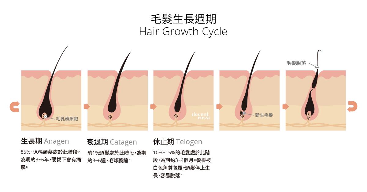 毛髮生長週期 為什麼每天都會掉頭髮