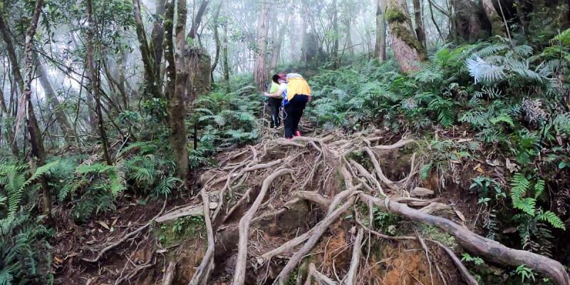 宜蘭加羅湖 加太縱走兩日露營太平山 倒木跨到飽會吃鞋的泥沼(上
