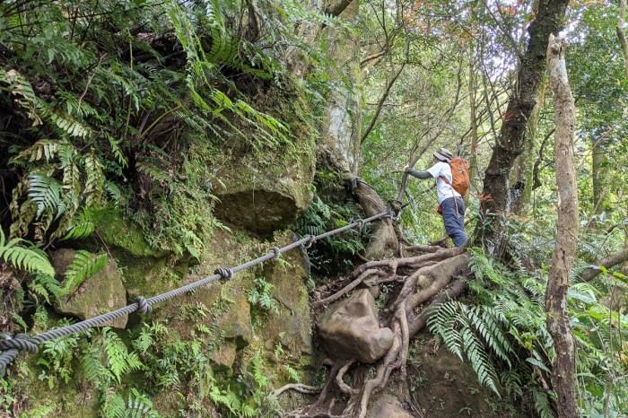 木柵猴山岳登山步道新手可以嗎?拉繩攀爬找雙扇蕨