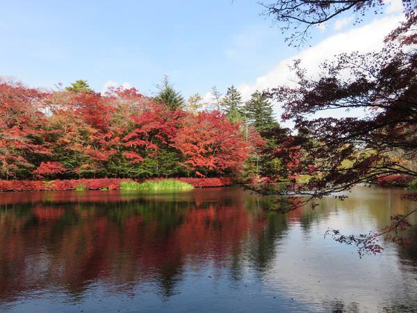 長野輕井澤雲場池 紅葉楓葉季之我醉了 - 不負責任的人生紀錄
