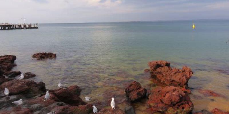《澳洲》墨爾本 Philip Island Penguins 一日遊 one day tour