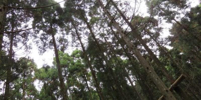 新竹。關西。馬武督探索森林。上。傳說中的綠光小學