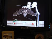 DARPA cyborg moth