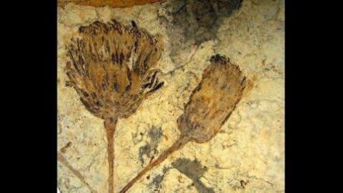 Une fleur fossili